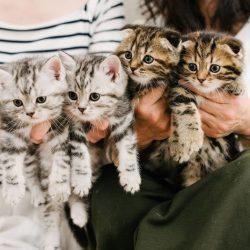 諏訪市 子猫 写真 トロッカ