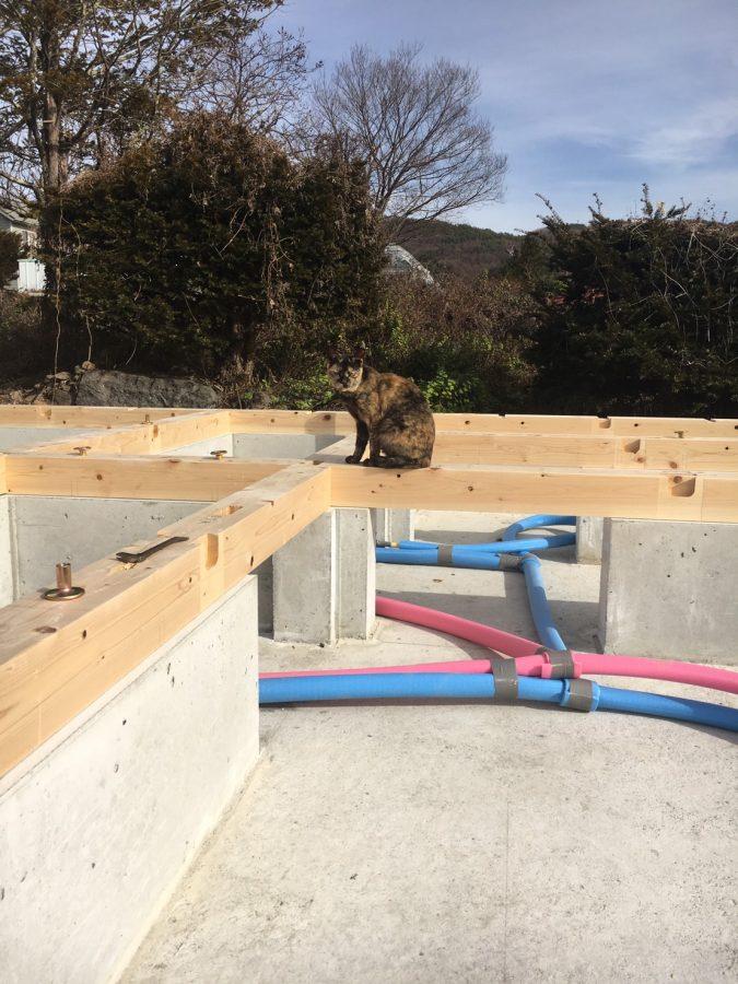 茅野 新築 土台敷き